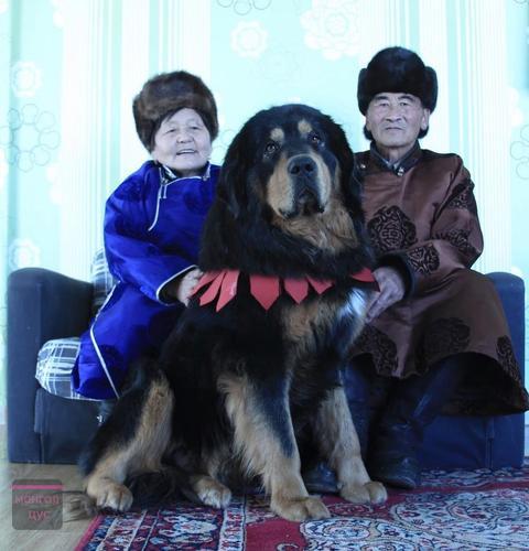 Монгол банхар гэр бүлтэйгээ