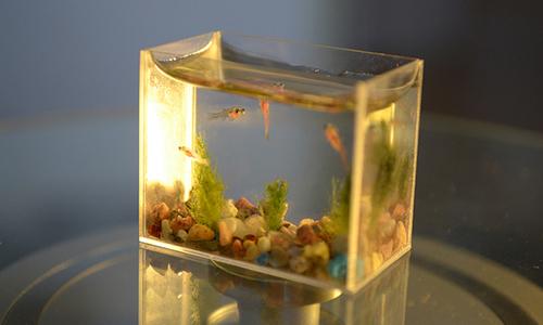 Гиннесийн номонд зориулан Нано аквариум бүтээв
