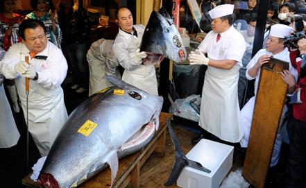Туна загасны мах 1,75 сая ам.долларын үнэд хүрэв