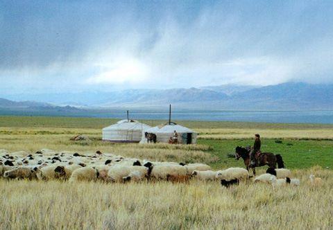 Монгол малчин айлын зуны нэг өдөр