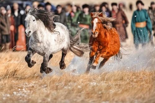 """""""Монгол адуу-2016"""" тэмцээн болно"""