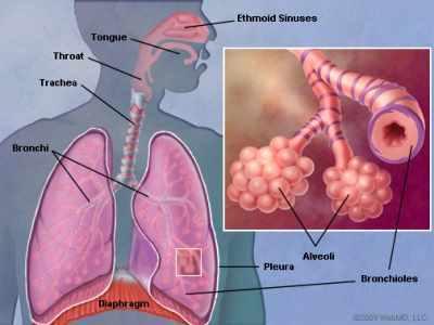 Сүрьеэ уушгийг өвчлүүлж, аажимдаа бусад эрхтэнд нөлөөлдөг