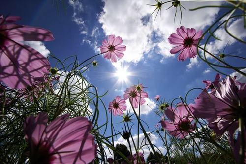 Цэцэг нялхарсан зун (өгүүллэг)