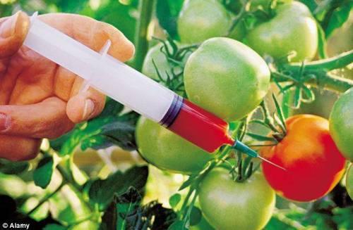 Генетикийн өөрчлөлт буюу ГМО гэж юу вэ