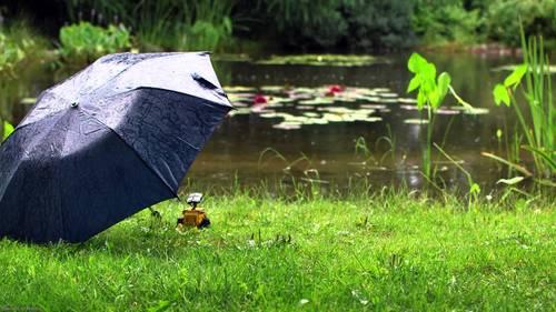 Ойрын өдрүүдэд ихэнх нутгаар бороо орно