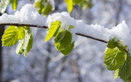 Хаврын сүүлчийн цас