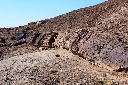 Зуун тавин сая жилийн тэртээх амьдралын гэрч- Сүйхэнтийн чулуужсан ой