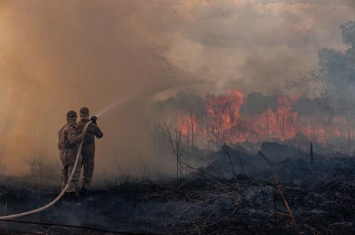 Амазоны гал түймрийг унтраахад цэргүүд дайчлахаар болжээ