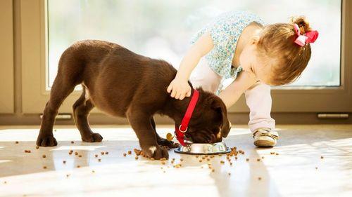 COVID-19:Гэрийн тэжээвэр амьтантай иргэдэд өгөх зөвлөмж